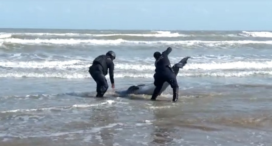 ASÍ LE SALVARON LA VIDA A DELFÍN, POLICÍAS DE TAMAULIPAS | VIDEO